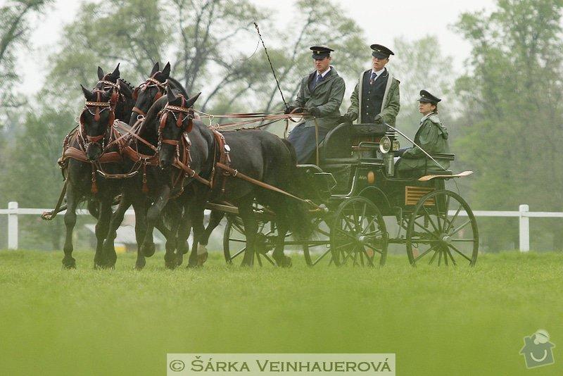 Fotografování koní: starokladrubsti-vranici-312
