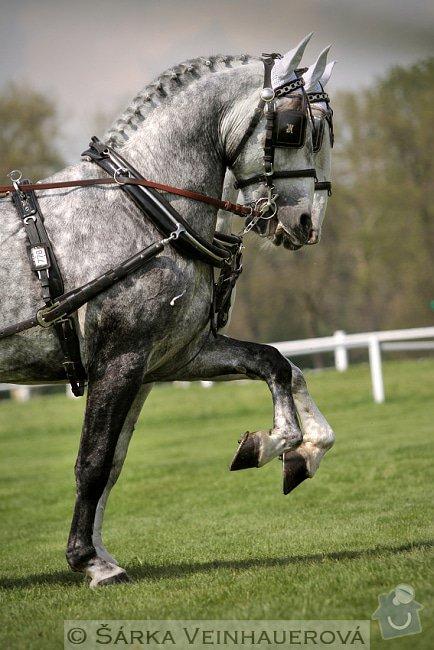 Fotografování koní: synchronizace-148