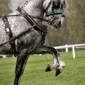 Fotografovani koni synchronizace 148