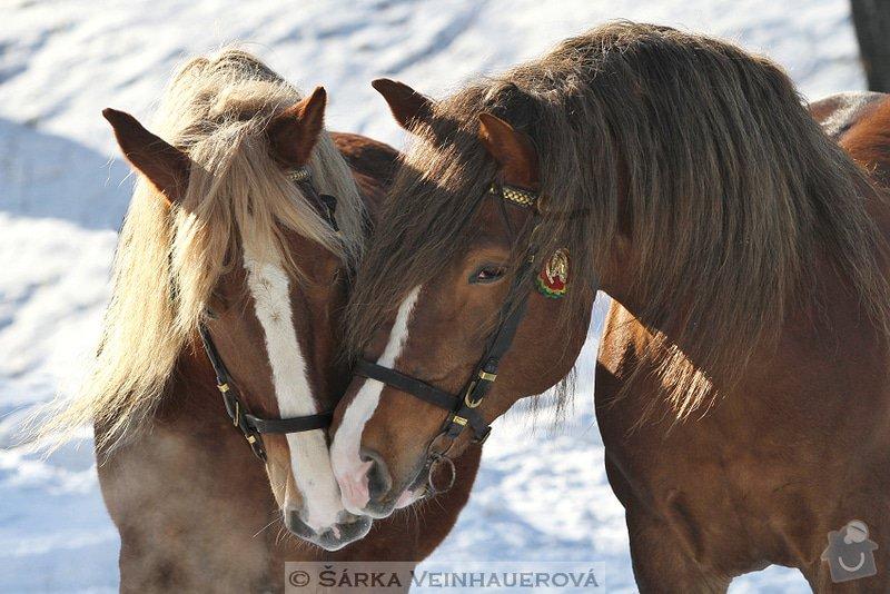 Fotografování koní: kastan-a-golias-382