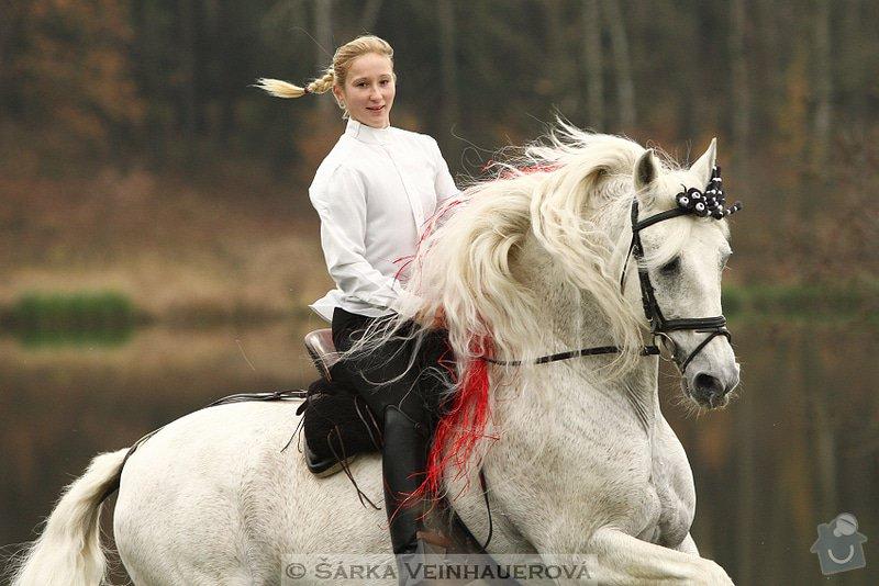 Fotografování koní: bandolero-xliv-pre-hrebec-21-let-337