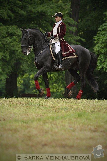 Fotografování koní: baroko-200