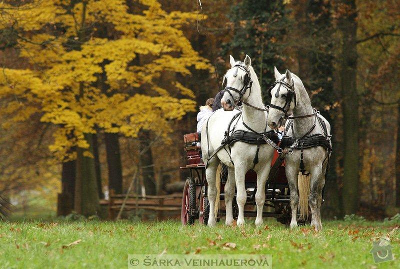Fotografování koní: belousi-s-kocarem-322