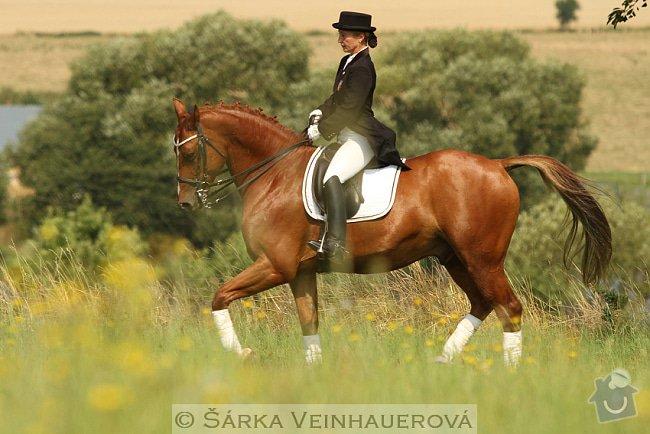 Fotografování koní: conelly-holandsky-teplokrevnik-263