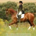 Fotografovani koni conelly holandsky teplokrevnik 263
