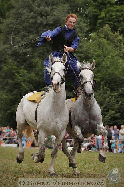 Fotografování koní: uherska-posta-218
