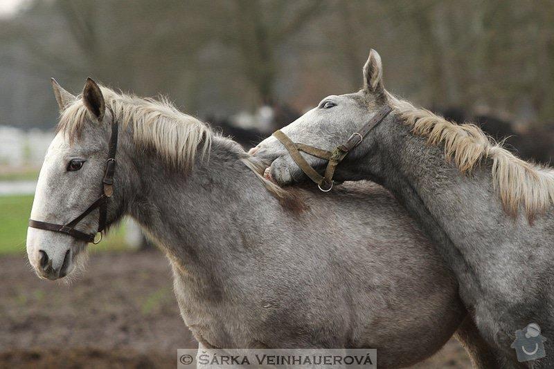 Fotografování koní: dorostenci-353