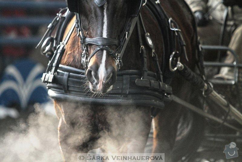 Fotografování koní: para-354