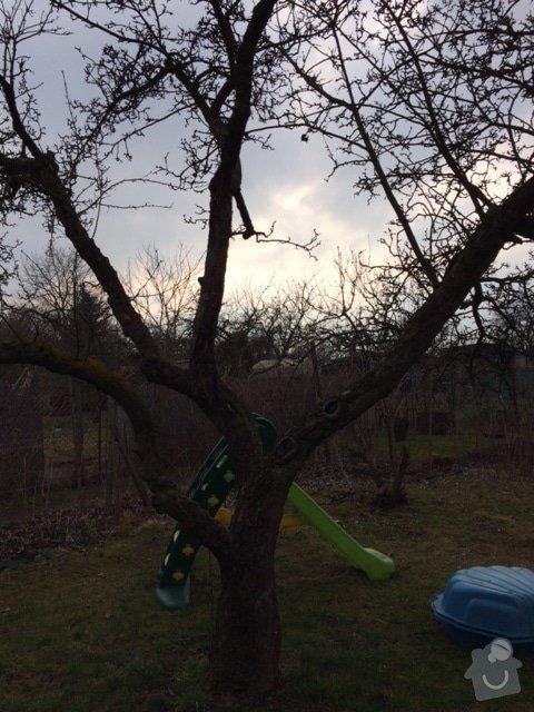 Pokaceni ovocnych stromu a vykopani parezu: IMG_0422
