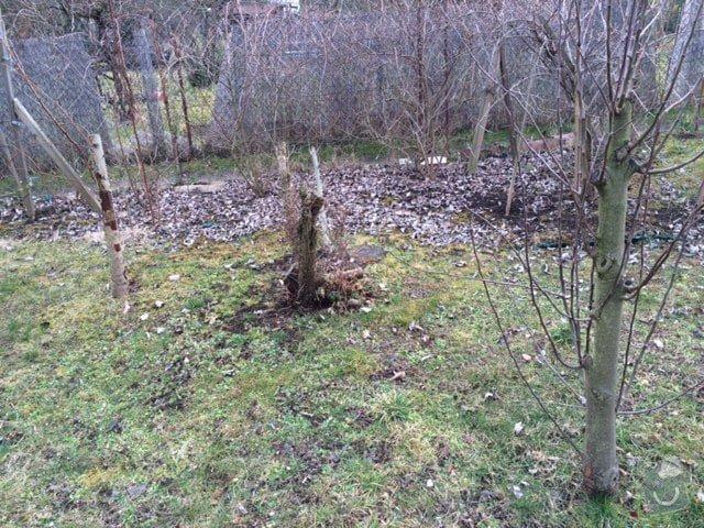 Pokaceni ovocnych stromu a vykopani parezu: IMG_0423