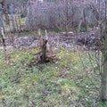 Pokaceni ovocnych stromu a vykopani parezu img 0423