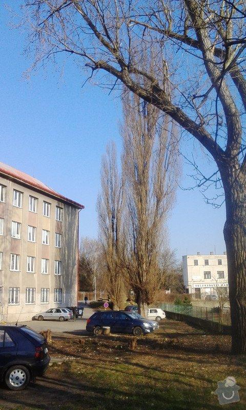 Pokácení 3 vzrostlých stromů: IMG_20150318_155534