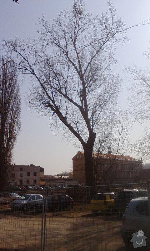 Pokácení 3 vzrostlých stromů: IMG_20150318_120358