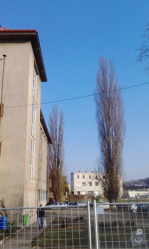 Pokácení 3 vzrostlých stromů: IMG_20150318_155619