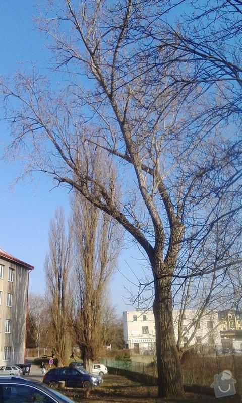 Pokácení 3 vzrostlých stromů: IMG_20150318_155548