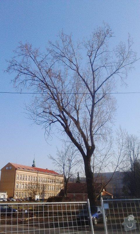Pokácení 3 vzrostlých stromů: IMG_20150318_155623
