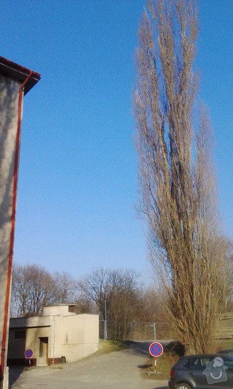 Pokácení 3 vzrostlých stromů: IMG_20150318_160256