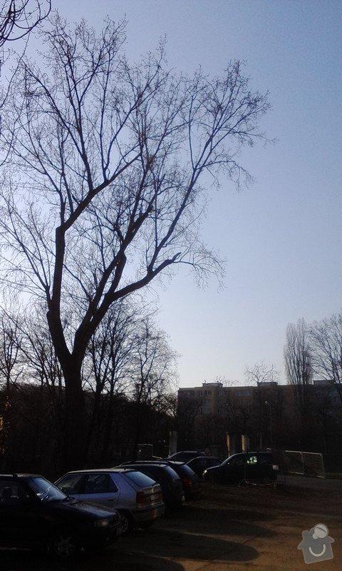 Pokácení 3 vzrostlých stromů: IMG_20150318_160234