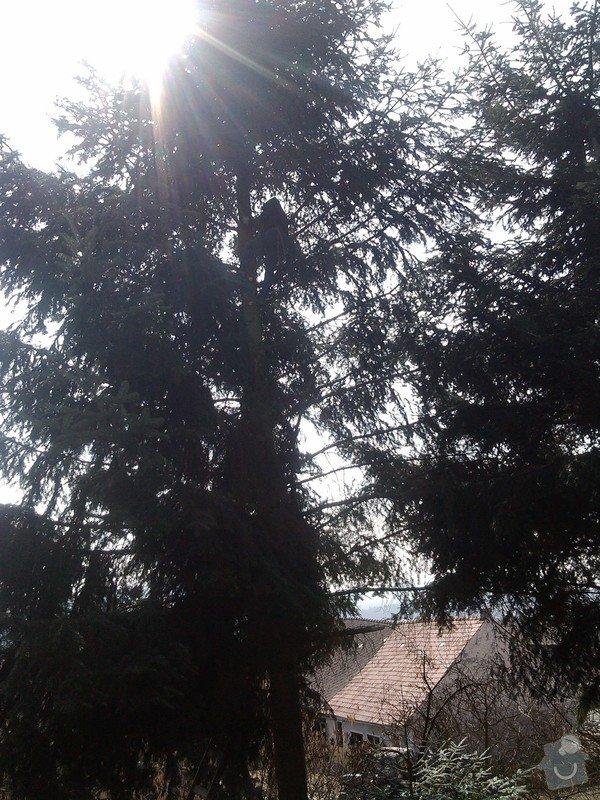Kácení stromů: IMG_20150323_120804