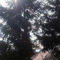Kaceni stromu img 20150323 120804