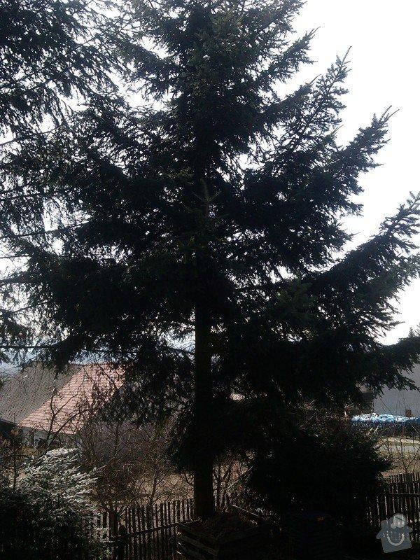 Kácení stromů: IMG_20150323_120809