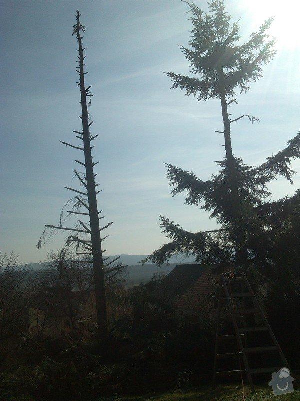 Kácení stromů: IMG_20150323_135849