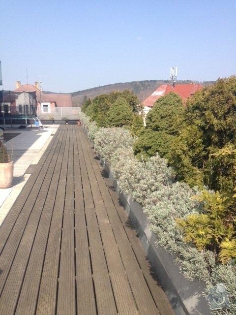 Návrh na osázení/výměnu rostlin na terase, jarní údržbu stávající zeleně: IMG_8603