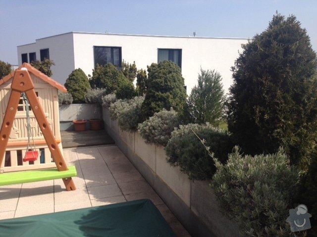 Návrh na osázení/výměnu rostlin na terase, jarní údržbu stávající zeleně: IMG_8606