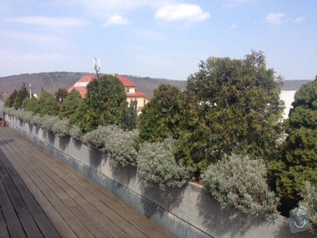 Návrh na osázení/výměnu rostlin na terase, jarní údržbu stávající zeleně: IMG_8607