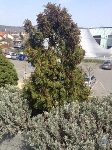 Návrh na osázení/výměnu rostlin na terase, jarní údržbu stávající zeleně: IMG_8604
