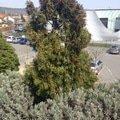 Navrh na osazeni vymenu rostlin na terase jarni udrzbu stavaj img 8604