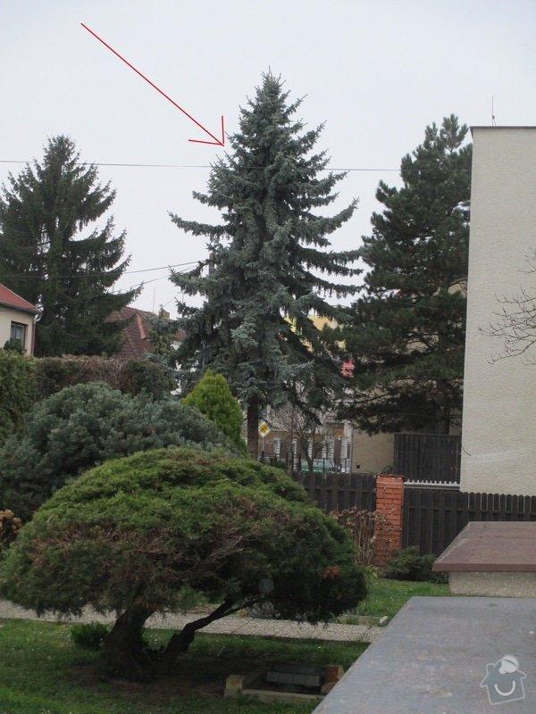 Pokácení stromu: Obr1