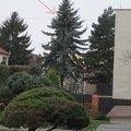 Pokaceni stromu obr1