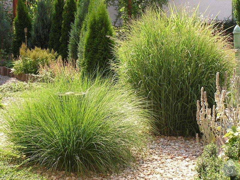 Návrh a realizace zahrady: travy_I