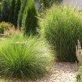 Navrh a realizace zahrady travy i