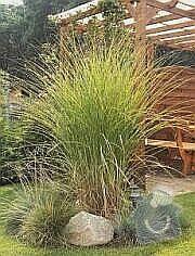 Návrh a realizace zahrady: trava_IV