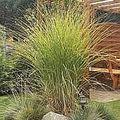 Navrh a realizace zahrady trava iv