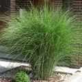Navrh a realizace zahrady trava vii