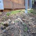 Uprava zahrady a dodelani plotu dosyp