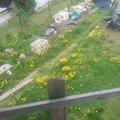 Srovnani zahrady 11225663 10204198882957048 568705289 n