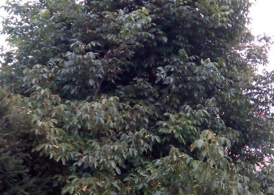 Pokácení a prořez stromů