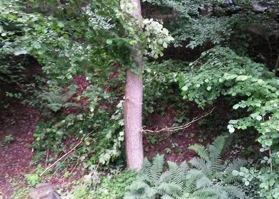 Kácení stromu - výškové práce