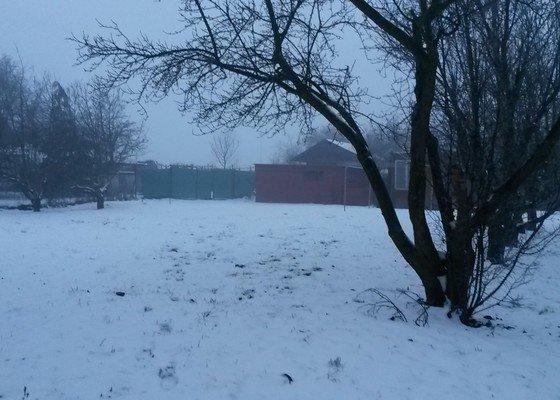 Prořez stromů Brno-Bystrc