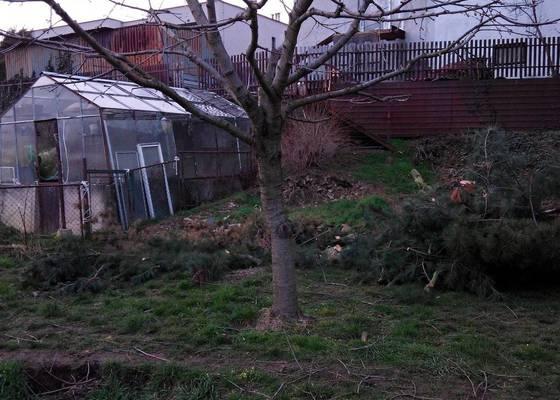 Posouzení stavu ořešáku + pokácení borovice