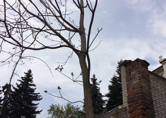 Kaceni stromu