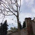 strom2